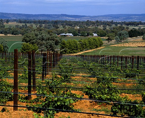 Vineyards on Richmond Grove estate   owned by Orlando Cowra New South Wales Australia