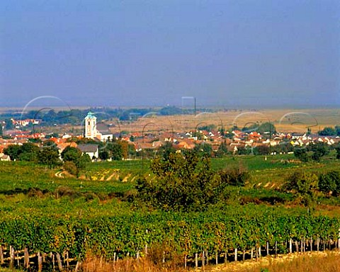 Vineyards around town of Oggau with the Neusiedler   See in the distance   Burgenland Austria   NeusiedlerseeHgelland