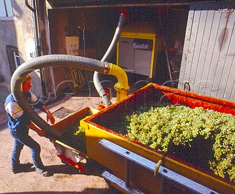 Unloading harvested Chardonnay grapes in village of   Fuiss SaneetLoire France   PouillyFuiss  Mconnais