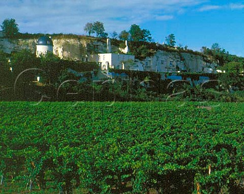 Troglodyte dwellings in cliff above vineyard at   Turquant near Saumur MaineetLoire France