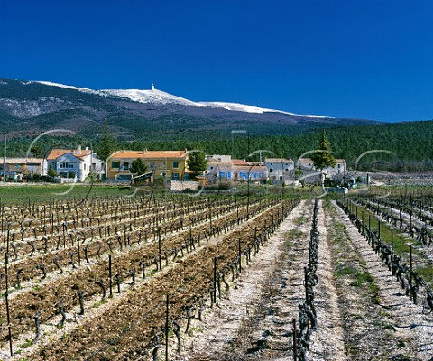 Vineyard in early spring with Mont Ventoux in distance SteColombe Vaucluse France  Ctes du Ventoux
