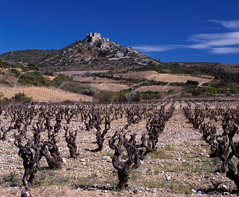 Early spring in vineyards below the Cathar Chteau dAguilar Tuchan Aude France   AC Fitou