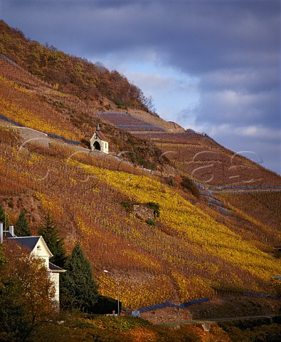 Clos StUrbain on the hill of Rangen above the town   of Thann  This Grand Cru vineyard owned by   Domaine ZindHumbrecht is noted for its Riesling     HautRhin France  Alsace