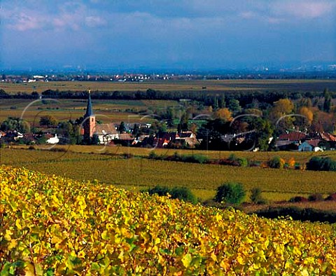 View from the Ungeheuer vineyard above village of   Forst Pfalz Germany   Pfalz