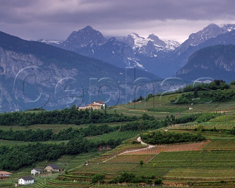 Vineyards at Palu in the Valle di Cembra with the   Gruppo di Brenta beyond Trentino Italy   DOC   Trentino