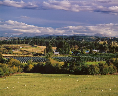 Neudorf Vineyards in the Moutere Valley   at Upper Moutere Nelson New Zealand