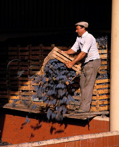 Periquita grapes from the Alentejo being unloaded at   Bacalha Vinhos Pinhal Novo near Setubal Portugal