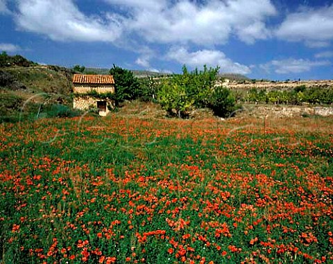 Poppies and stone hut near Miedes Aragon Spain    DO Calatayud