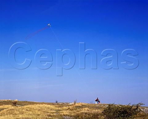 Father and children flying kite