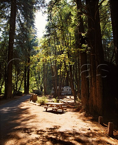 Picnic and camping site amongst the Redwood trees in Paul M Dimmick Memorial Grove State Park Mendocino Co California