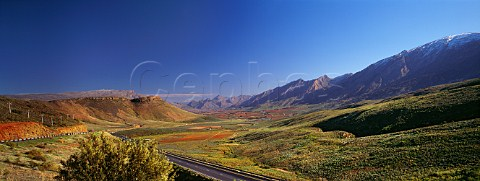 Autumnal vineyards in the Hex River Valley near Worcester Cape Province South Africa Worcester WO