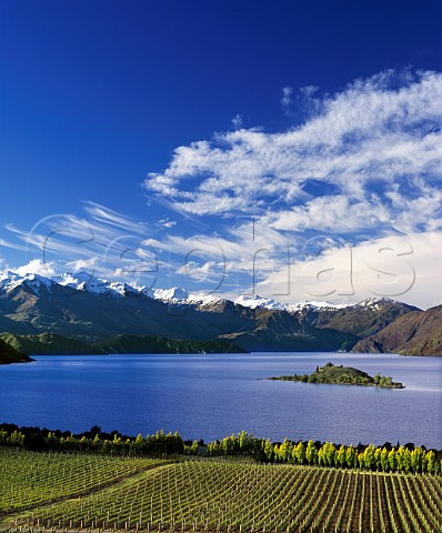 Rippon Vineyard on the shore of Lake Wanaka with the   Buchanan Mountains in the distance   Central Otago New Zealand