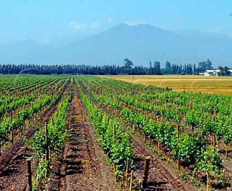 Vineyards at El Monte in the Maipo Valley with the   coastal range beyond Chile