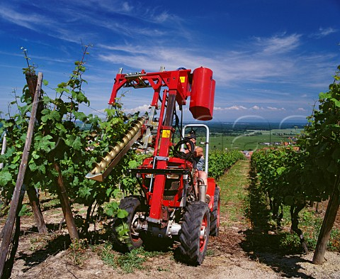 Machine which lifts the new foliage and runs two strings along underneath one each side of the posts clipping them together at regular intervals with a metal band This keeps the canopy aloft to aid ventilation and ripening of the developing grapes DambachlaVille Alsace France