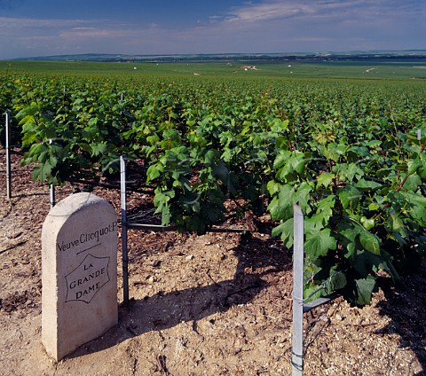 Chardonnay vineyard unusual for this area below the Manoir de Verzy on the Montagne de Reims Grapes are used for La Grande Dame the prestige cuve of Veuve   Clicquot Ponsardin  Verzy Marne France  Champagne