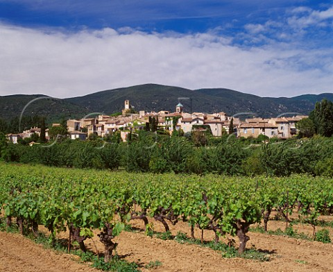 Vineyard at Lourmarin with the Montagne du Lubron beyond Vaucluse France   Ctes du Lubron