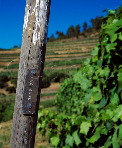 Marker post by one of the parcels of the ungrafted   Naional vineyard of Quinta do Noval   Pinho Portugal   Port  Douro