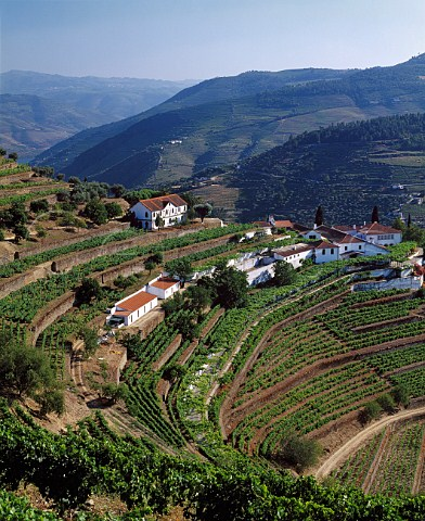 Terraces at Quinta do Noval with parcels of the   ungrafted Naional vineyard to the left of and below   the upper building    Pinhao Portugal   Port