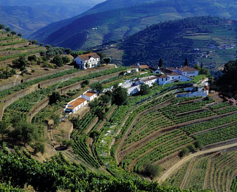 Terraced vineyards at Quinta do Noval with parcels   of the ungrafted Naional vineyard to the left of   and below the upper building    Pinho Portugal   Port  Douro