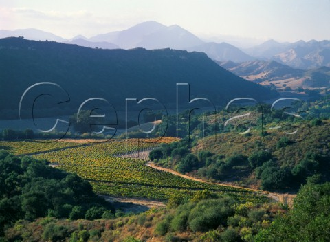Saucelito Canyon Vineyards nonirrigated 100year old Zinfandel vines  San Luis Obispo County California  Arroyo Grande AVA