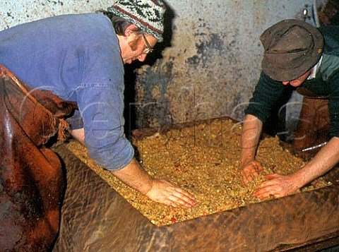 Pushing pomace pommage into horsehair   mould to form cheese before pressing   Burrow Hill cider farm  Somerset   England