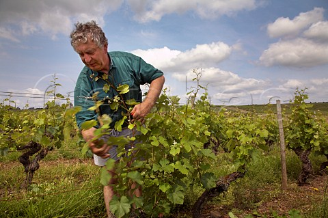Claude Papin working with Chenin Blanc vines in Clos de la Soucherie vineyard of Chteau Pierre Bise BeaulieusurLayon MaineetLoire France Coteaux du LayonVillages