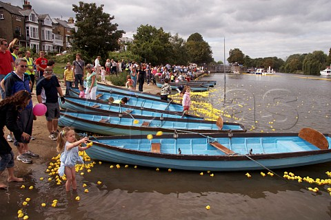 Some of the 165000 plastic ducks get caught up around rowing boats near Hampton Court on the River Thames during the Great British Duck Race 2007 a new Guinness World Record East Molesey Surrey England
