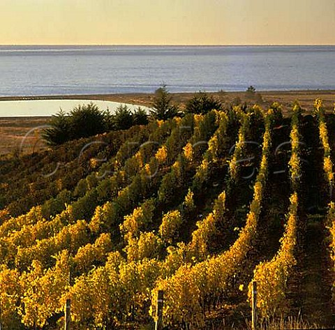 Spencer Hill Coastal Range vineyards above the Tasman Bay Nelson  New Zealand Nelson