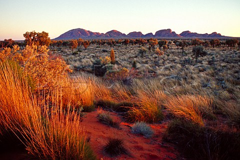 Kata Tjuta The Olgas at sunrise UluruKata Tjuta National Park Northern Territory Australia