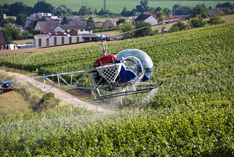 Helicopter spraying vineyard near pernay Marne France Champagne