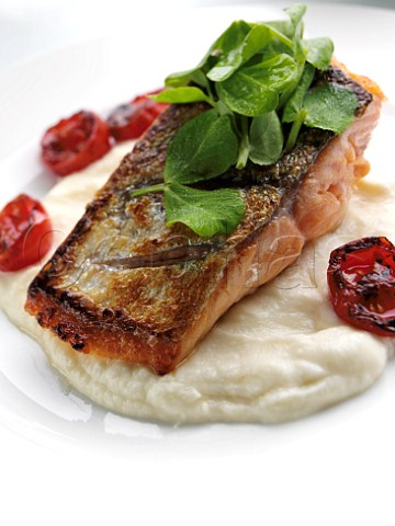 Salmon and celariac puree