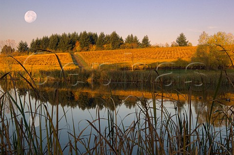 Reflection in pond at Ribbon Ridge vineyard of Aramenta Cellars Newberg Oregon USA  Willamette Valley
