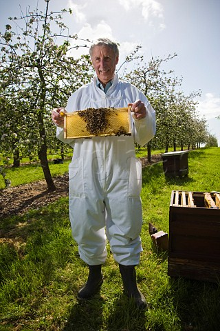 Beekeeper checking his honey bees and bee hives in a cider apple orchard Sandford  North Somerset England