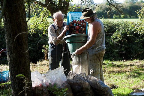 Cider maker Frank Naish aged 85 gathering cider apples with his friend Paul Chant Glastonbury Somerset England