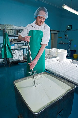 Goats Cheese maker splitting the curds and whey White Lake Cheese Bagborough Farm Somerset England