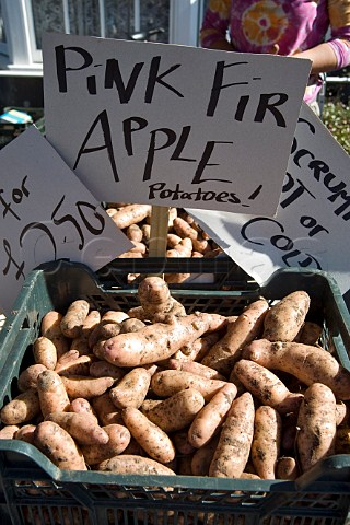 Pink Fir Apple Potatoes in a farmers market at Thornbury Gloucestershire England