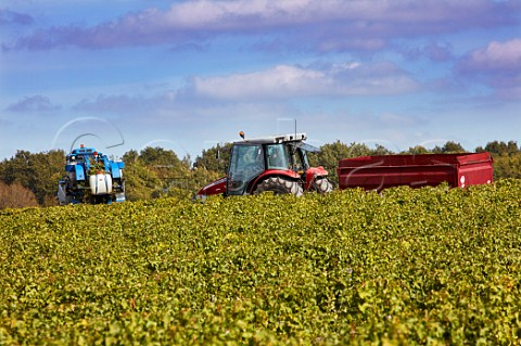 Machine harvesting Sauvignon Blanc grapes in vineyard at Quincy Cher France  Quincy
