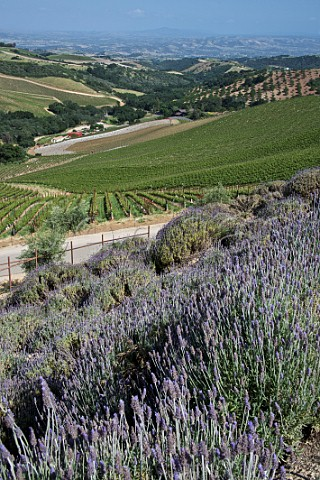 Daou Vineyards on Daou Mountain in the Adelaida District Paso Robles California  Paso Robles