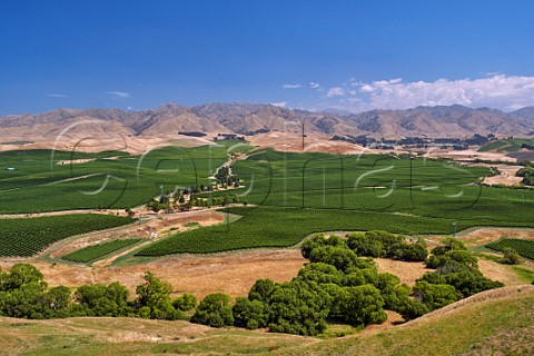 Vineyards south of Seddon Marlborough New Zealand Awatere Valley
