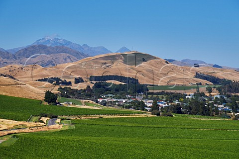 Vineyards around the town of Seddon with Mount TapuaeOUenuku in distance Marlborough New Zealand Awatere Valley
