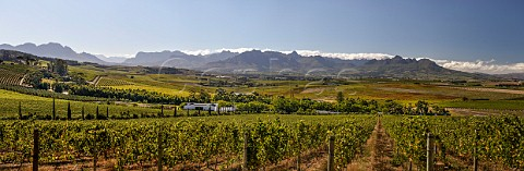 View over vineyards of DeMorgenzon Stellenbosch Western Cape South Africa