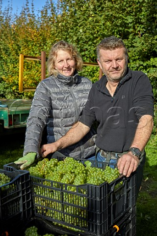 Robert and Augusta Raimes with crates of harvested Chardonnay grapes in Arch Peak vineyard of Raimes Sparkling Wine Hinton Ampner Hampshire England