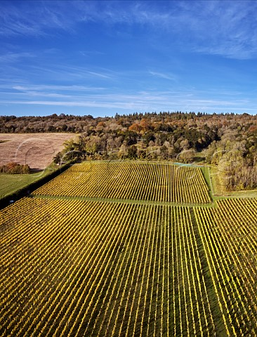 Albury Vineyards on the North Downs Silent Pool Albury Surrey England