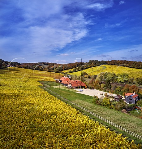 Hundred Hills Vineyard and winery in the Chiltern Hills  Pishill with Stonor Oxfordshire England