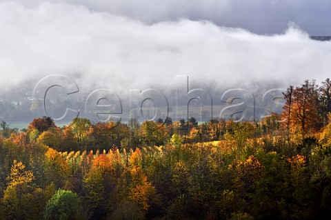 Autumn in the vineyards of Denbies Wine Estate Dorking Surrey England