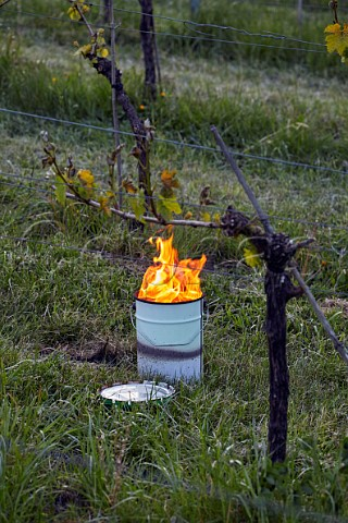 Candle burning on a frosty spring morning at Albury Vineyard Silent Pool Albury Surrey England