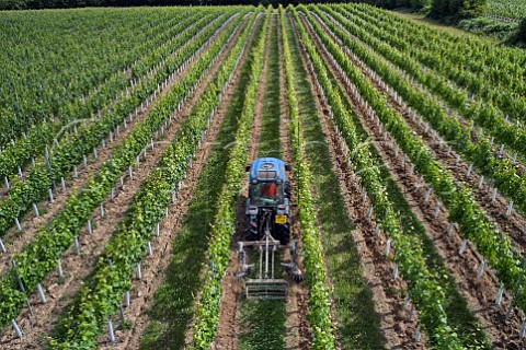 Weed control in Hazelhurst Farm Vineyard of Roebuck Estates Ticehurst Sussex England