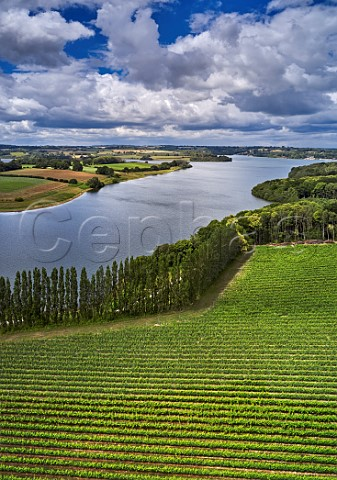 Pinot Noir Vineyard at Rosemary Farm a grower for Chapel Down with Bewl Water beyond  Wadhurst Sussex England