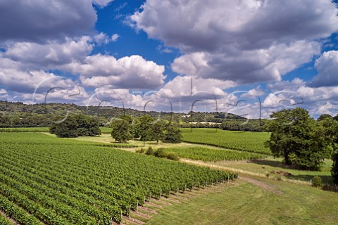 Court Farm Vineyard of Chapel Down with the North Downs beyond Boxley Kent England
