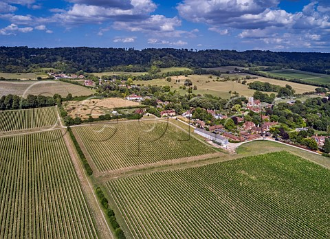 Street Farm Vineyard of Chapel Down with the North Downs beyond Boxley Kent England